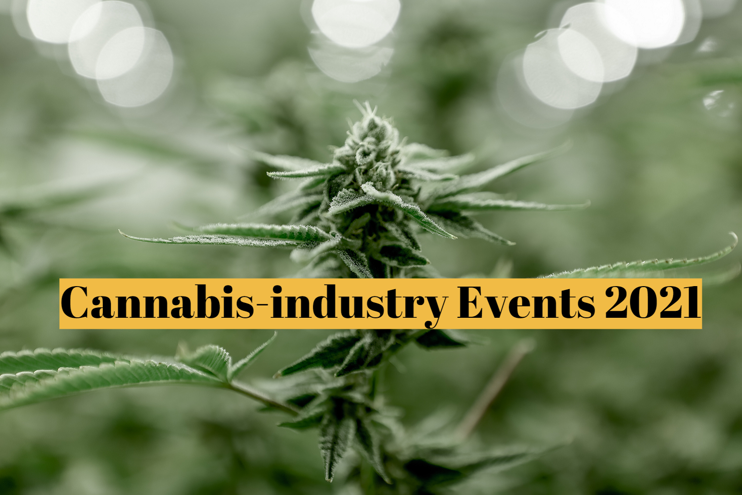 Cannabis-industry EXPO/Conference Updated Schedule in 2021